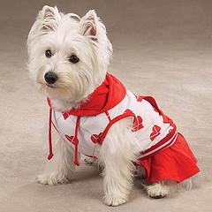 Cachorro com roupa