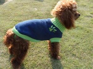 Roupas De Cachorros Para o Inverno – Modelos, Onde Comprar-1