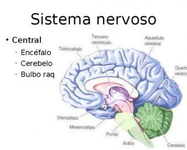 Fortalecer o Sistema Nervoso