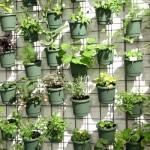 Como fazer uma horta em casa1