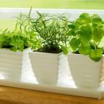 Como fazer uma horta em casa3