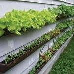 Como fazer uma horta em casa4