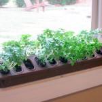 Como fazer uma horta em casa5