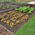 Como fazer uma horta em casa6