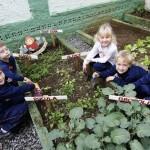 Como fazer uma horta em casa8