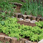 Como fazer uma horta em casa9