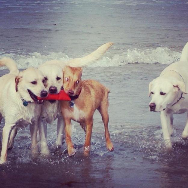 Cuidados ao levar o cachorro para a praia